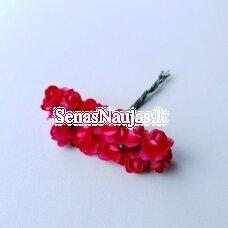 Popierinės rožytės, fuksijos sp., 12 žiedų